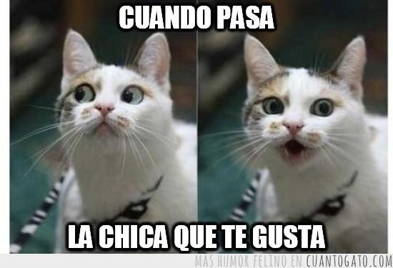 humor gatos