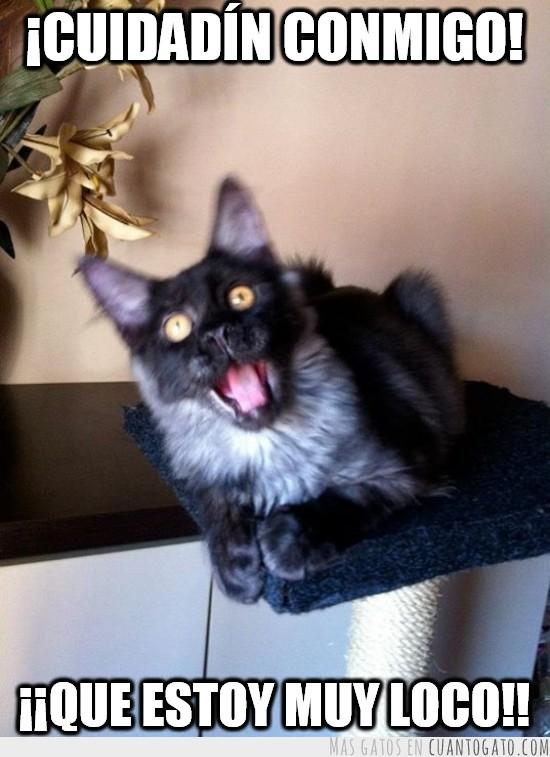 foto de gato loco