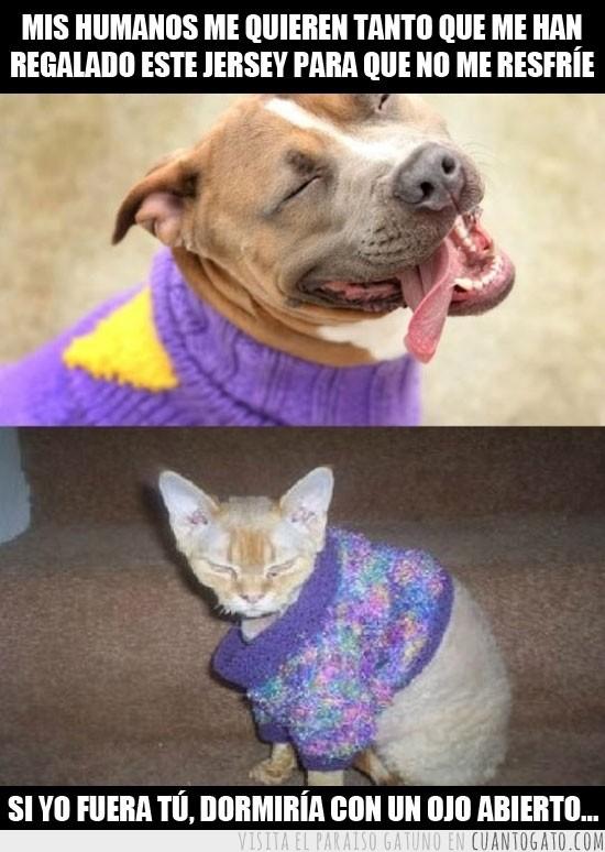montajes graciosos de gatos