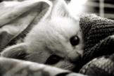 gato acurrucado